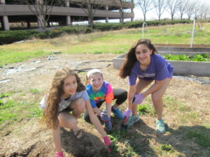 Tu B'Shevat Congregation Ahavath Sholom Religious School students planted in Gan Ahavath Sholom in honor of Tu B'Shevat Sunday, Feb. 12.  Sima Galaganov (left), Lia Bloom, Samantha Ratner
